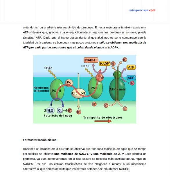 esquema general metabolismo secretos